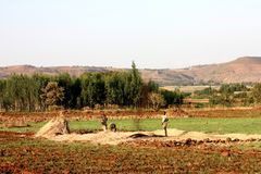 Agricoltura etiopica Fotografie Stock