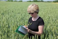 Agricoltura, exprert di agronomia in grano Fotografie Stock Libere da Diritti