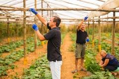 Agricoltura, fare il giardinaggio, agricoltura e concetto della gente - affare di famiglia Famiglia che lavora insieme nella serr Immagini Stock