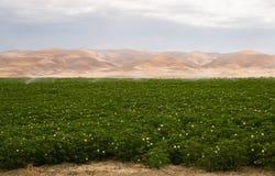 Agricoltura fertile di California di irrigazione della pianta del campo dell'azienda agricola Fotografia Stock Libera da Diritti