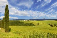 Agricoltura, fondo, bello, bellezza, nuvole, variopinte, paese, campagna, cipresso, giorno, ambiente, europeo, campo, gr Immagini Stock