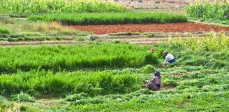 Agricoltura a forte intensità di mano d'opera autosufficiente nel Marocco Immagine Stock Libera da Diritti