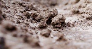 agricoltura Foto di argilla marrone nel giardino Macro effetto Fotografia Stock Libera da Diritti