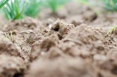 agricoltura Foto di argilla marrone nel giardino Macro effetto Fotografia Stock
