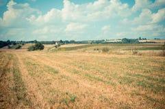 Agricoltura fresca Immagine Stock Libera da Diritti