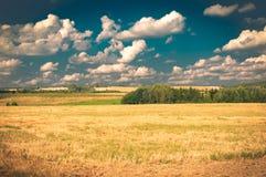 Agricoltura fresca Fotografie Stock