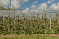 Agricoltura - frutti Fotografie Stock Libere da Diritti
