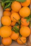 Agricoltura - frutti Fotografia Stock