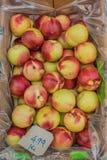 Agricoltura - frutti Immagine Stock