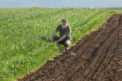 Agricoltura, giacimento di grano d'esame dell'agricoltore Immagini Stock Libere da Diritti