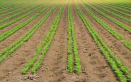 Agricoltura giapponese Fotografie Stock Libere da Diritti