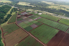 Agricoltura in Hawai Fotografie Stock Libere da Diritti