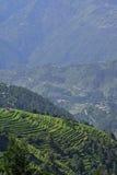 Agricoltura himalayana di punto Immagine Stock