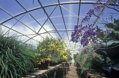 Agricoltura idroponica al centro di EPCOT, FL Immagine Stock Libera da Diritti