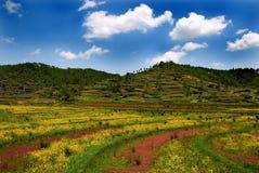 Agricoltura indiana fotografia stock libera da diritti