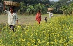 Agricoltura indiana Fotografia Stock