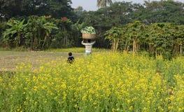 Agricoltura indiana Fotografie Stock Libere da Diritti