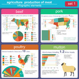 Agricoltura, infographics di zootecnia, illustrazioni di vettore Immagini Stock Libere da Diritti