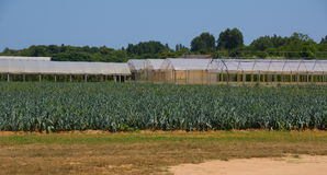 Agricoltura in Italia Immagini Stock Libere da Diritti
