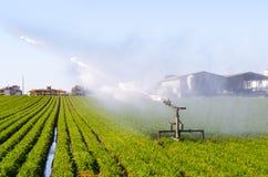 Agricoltura in Italia Immagine Stock Libera da Diritti