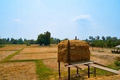 Agricoltura Kratie, Cambogia del paesaggio dell'albero della palla della paglia fotografia stock libera da diritti