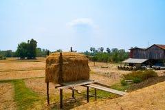 Agricoltura Kratie, Cambogia del paesaggio dell'albero della palla della paglia fotografia stock