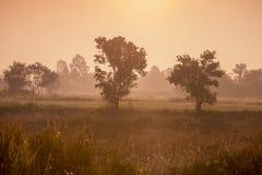 AGRICOLTURA LANDSCAOE DELLA TAILANDIA ISAN UDON THANI Fotografia Stock