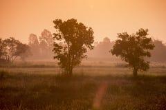 AGRICOLTURA LANDSCAOE DELLA TAILANDIA ISAN UDON THANI Fotografie Stock Libere da Diritti
