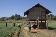 Agricoltura - lo Stato Shan - Myanmar Immagine Stock Libera da Diritti