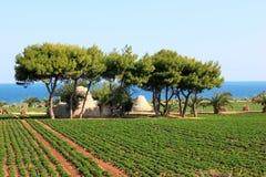 Agricoltura lungo il mare adriatico, Italia Immagini Stock Libere da Diritti