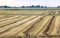 Agricoltura lungo il mare adriatico, Italia Fotografia Stock