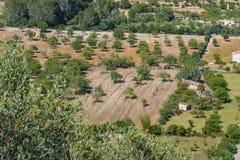 Agricoltura in Mallorca Fotografie Stock Libere da Diritti