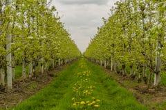 Agricoltura - meleto Fotografia Stock Libera da Diritti