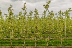 Agricoltura - meleto Immagine Stock Libera da Diritti