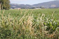 Agricoltura mista Fotografie Stock Libere da Diritti