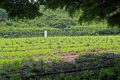 Agricoltura mista del raccolto Fotografia Stock