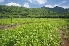 Agricoltura mista del raccolto Fotografia Stock Libera da Diritti