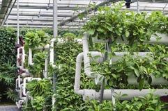 Agricoltura moderna Immagine Stock Libera da Diritti