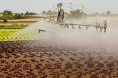 Agricoltura moderna con gli spruzzatori su un giacimento dell'insalata Fotografia Stock Libera da Diritti