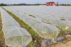 Agricoltura moderna della Taiwan Fotografia Stock