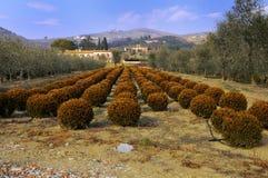 Agricoltura moderna e paesaggio tradizionale Fotografia Stock Libera da Diritti