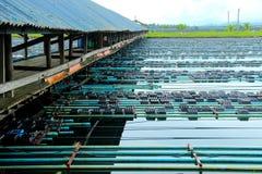 Agricoltura morbida del granchio delle coperture del canestro Immagini Stock