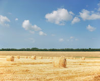 Agricoltura - mucchio di fieno Immagine Stock Libera da Diritti