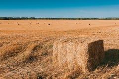 Agricoltura - mucchio di fieno Fotografia Stock Libera da Diritti