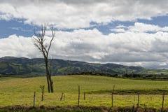Agricoltura negli altopiani andini Immagini Stock Libere da Diritti