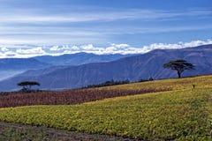 Agricoltura negli altopiani andini Fotografia Stock
