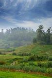 Agricoltura nei tropici Immagine Stock Libera da Diritti