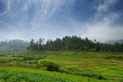 Agricoltura nei tropici Fotografie Stock Libere da Diritti