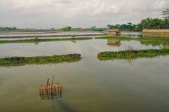 Agricoltura nel Bangladesh Fotografia Stock Libera da Diritti