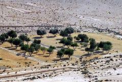 Agricoltura nel deserto di Negev Immagini Stock Libere da Diritti